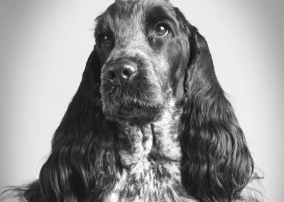 hund fotografering lysterart.com